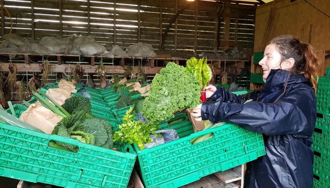 In een CSA landbouwbedrijf wordt de oogst verdeeld. (Foto: Anna Birgitte Milford)