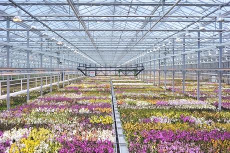 Waar Gaat Het Heen Met De Orchidee