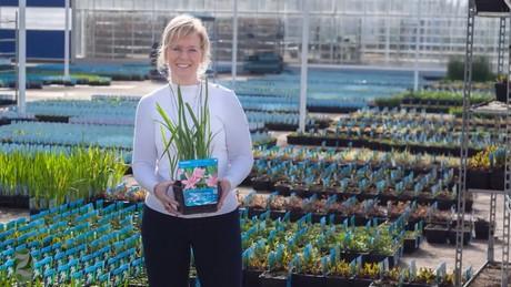Dutch Nursery Builds Waterplant Imperium