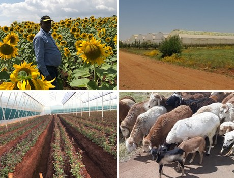 Ethiopia: Environmentally aware grower recruits help from fish, sheep, bees and worms