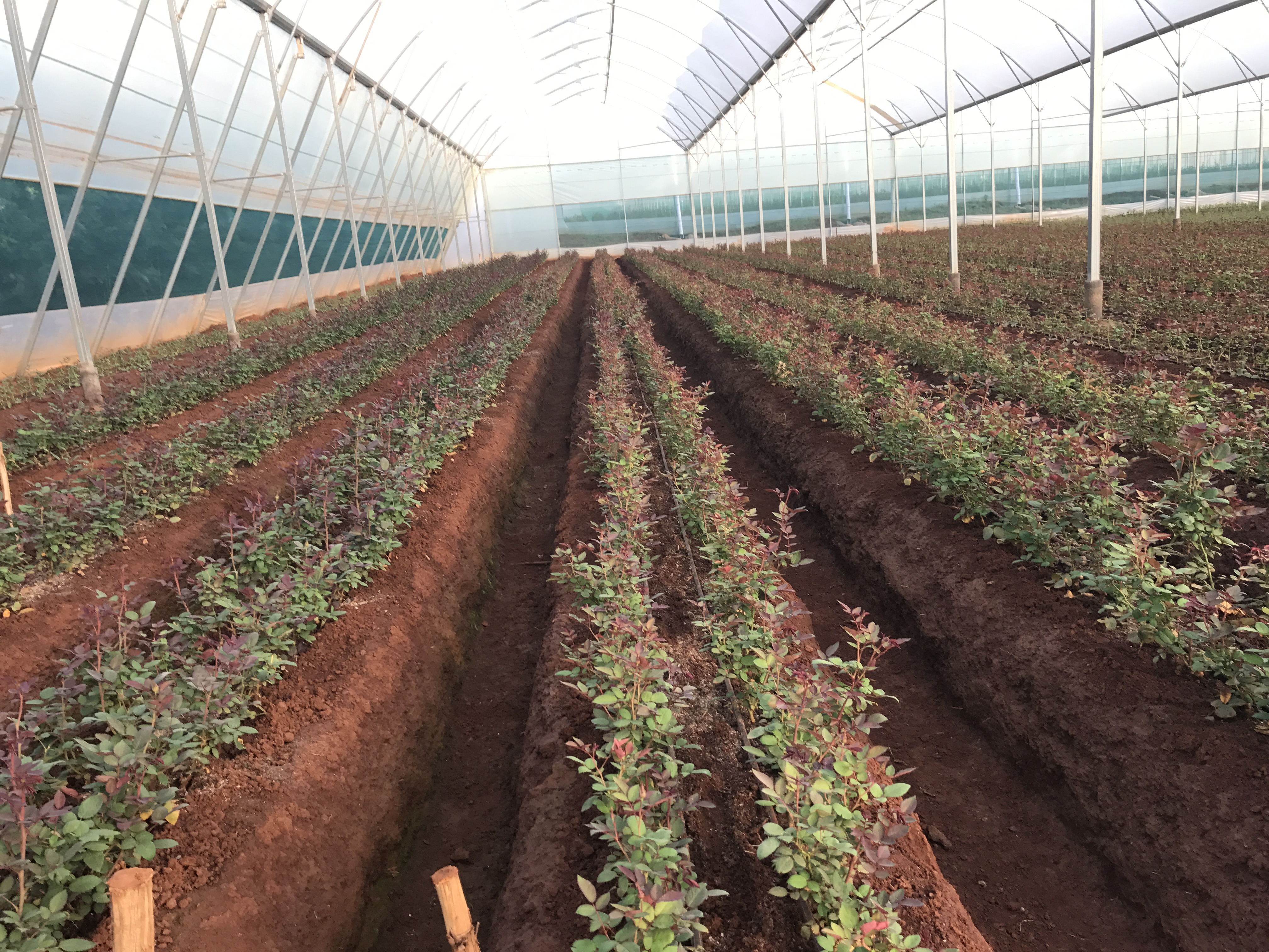 Ethiopia: Environmentally aware grower recruits help from