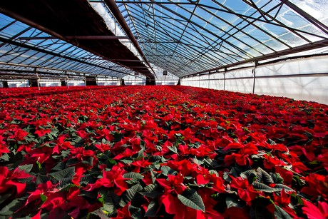 Assessing training needs for Ontario's flower growing industry