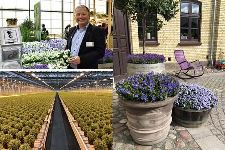 Floraldaily Global Flower News