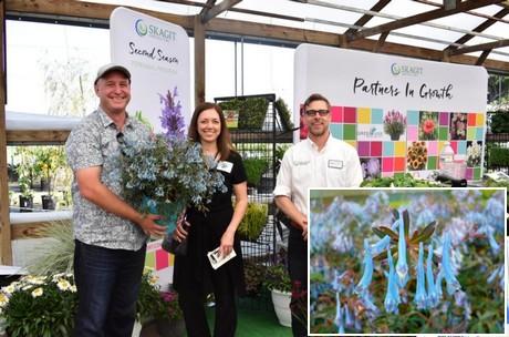 Tegel Gatenzaag Gamma : Floraldaily: global flower news