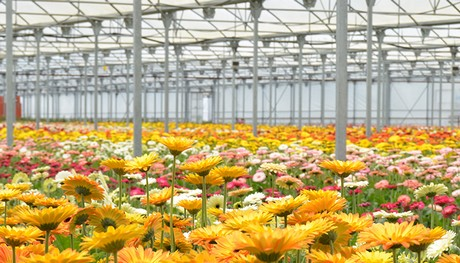 How Does The Dutch Floricultural Industry Look Like In Ten Years From Now