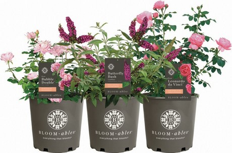 This Lineup Allows Consumers To Have A Garden That Blooms All Season