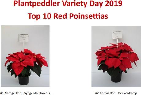 Plantpeddler Poinsettia Variety Day 2019 Results