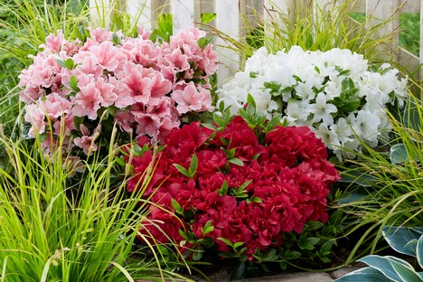 Focus On Special Flower And Foliage Colours