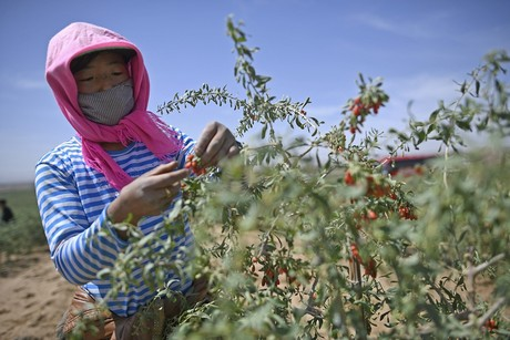 Consumers Begin To Appreciate Nutritional Value Of Dried Chinese