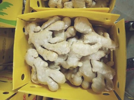 Price of fresh Chinese ginger continues to climb
