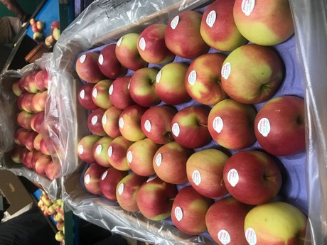 Imported Polish apples popular in China