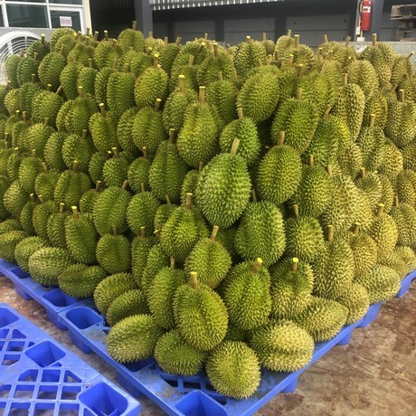 Bumper Thailand durian harvest still can't satisfy Chinese