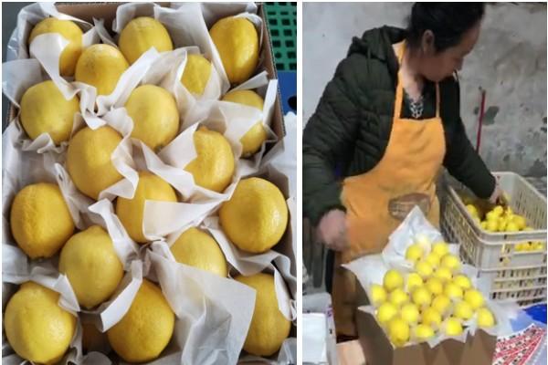 Yellow Lemons Apron Small