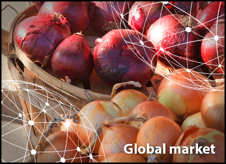 OVERVIEW GLOBAL ONION MARKET