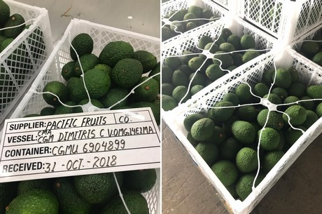 First Colombian avocados arrive on the Saudi Arabian market