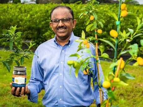 Citrus Scientist Providing Faster Growing Trees With Micro Budding