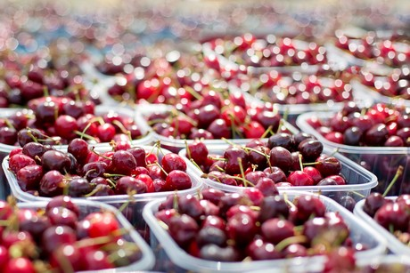Cherries in punnets