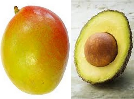 Mangoes & avocados positively impacting male fertility