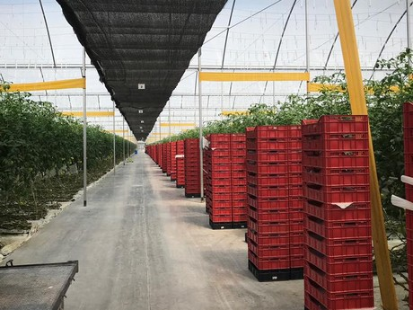 Hortidaily: global greenhouse news