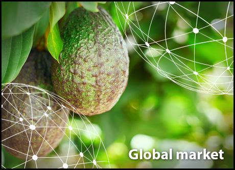 OVERVIEW GLOBAL AVOCADO MARKET