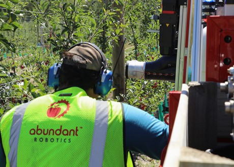 World's first commercial robotic apple harvest at T&G's