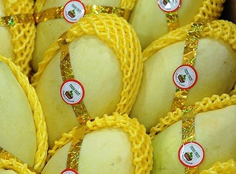 Vietnam: Mangoes still being exported to US