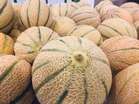 Melon grower-distributor to exhibit new summer program