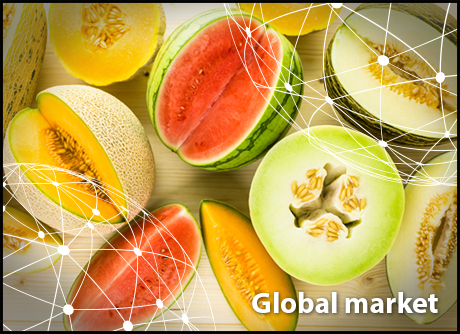 Overview Global Melon And Watermelon Market