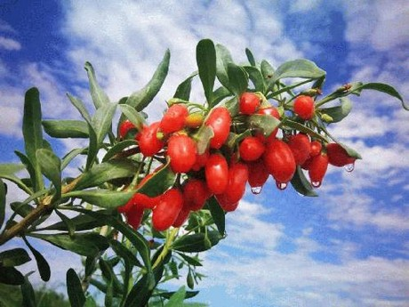 The Second Goji Berry Industry Expo Held In Zhongning China