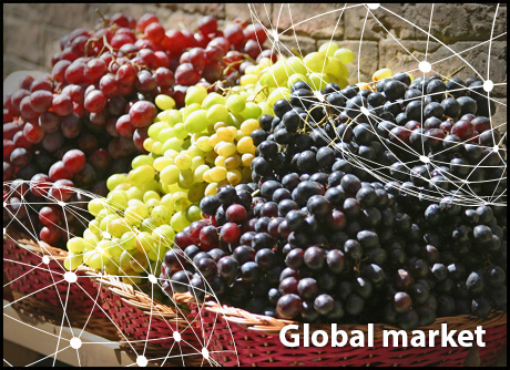 Overview Global Table Grape Market
