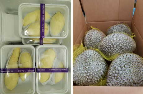 Thai Durian is becoming popular in the overseas market""