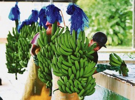 FreshPlaza: Global Fresh Produce and Banana News