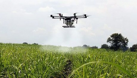 Banana smallholders to start using drones for aerial spraying