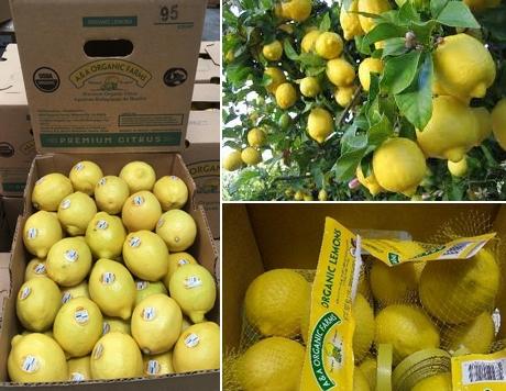 81e2795f2f29b FreshPlaza: Global Fresh Produce and Banana News
