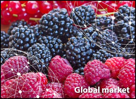 Onwijs FreshPlaza: Global Fresh Produce and Banana News OP-56