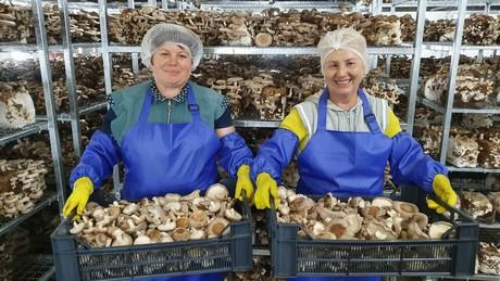 Shiitake Mushroom Farm On Hungarian Ukraine Border Opens For Business