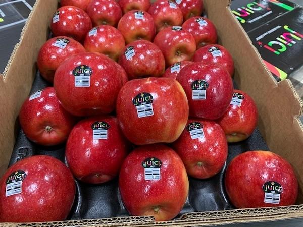 Image result for Juici apple