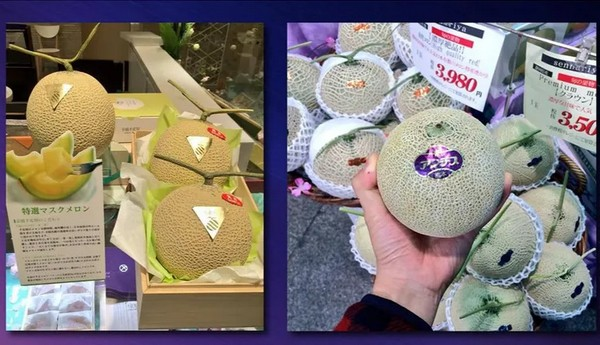 Price Of Hokkaido Melons At Season S First Auction Lower Than Last Year Последние твиты от cantaloupe (@cantaloupecons). first auction lower than