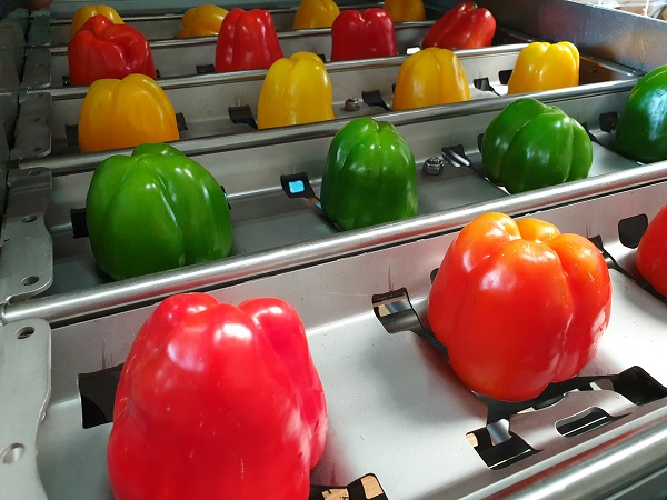 pepper de-coring machine