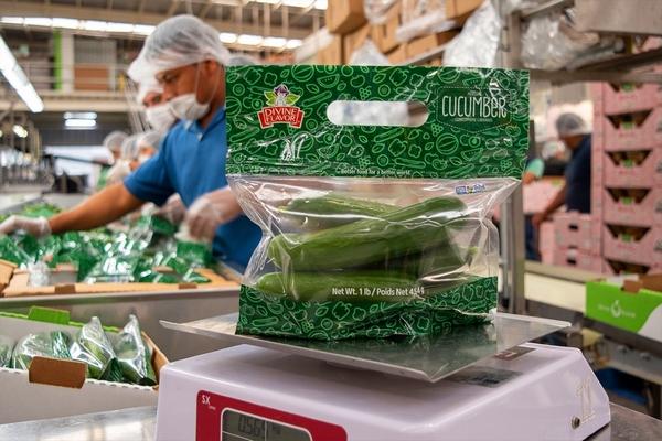 cucumber packaging