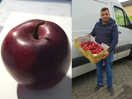 Price of St  Nicholas apples too low in relation to their