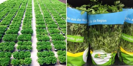 Erbe aromatiche in vaso un business anche a bornheim for Erbe aromatiche in vaso