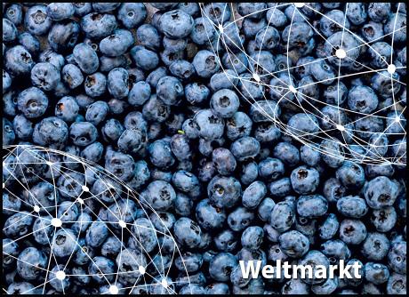 Kleurplaten Taarten Van Abel.Freshplaza Aktuelle Nachrichten Aus Der Globalen Obst Und