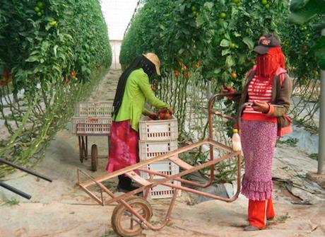 La superficie de invernadero crece más en Marruecos que en Almería