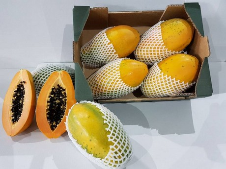 Lugar de origen de la papaya