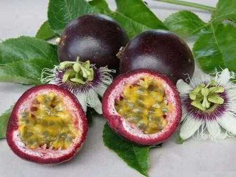 Freshplaza Noticias Del Sector De Frutas Y Verduras