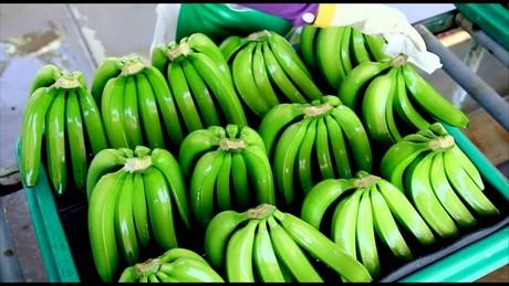 0f8c285d2a5e7d Peru: lichte exportdaling biologische bananen