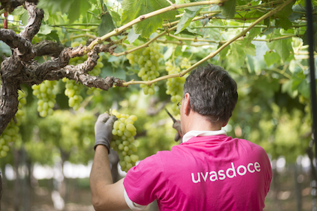 Grape campaign Uvasdoce 2019