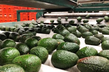 General fresh produce