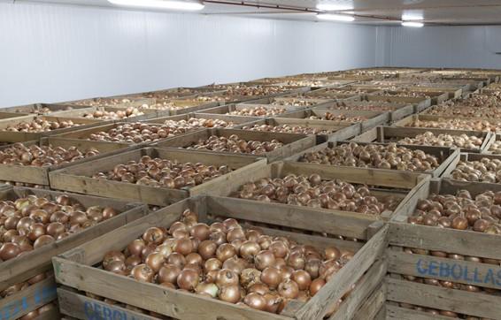 El cierre del canal horeca causa un exceso de cebollas españolas grandes